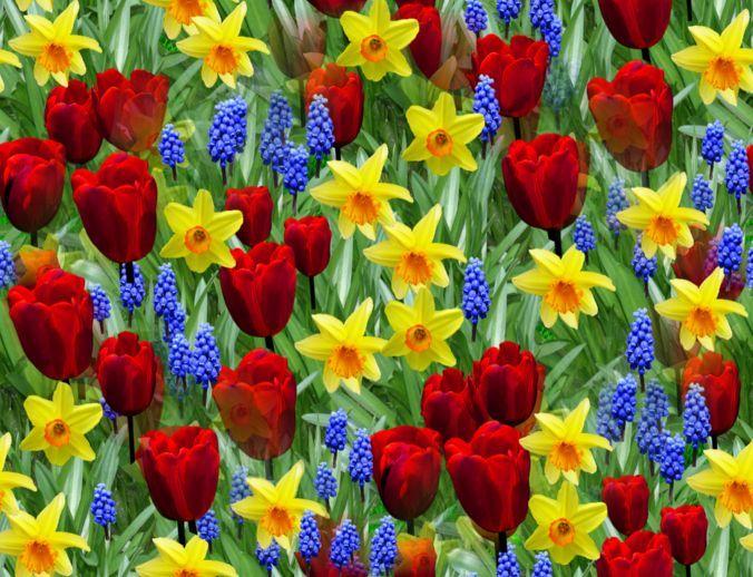 Spring flowers wallpaper hd beautiful black and white flowers spring flowers wallpaper hd mightylinksfo Gallery