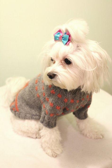 stricken hund pullover für kleine hunde mädchen oder