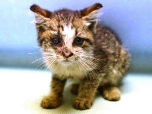 4 Week Old Kitten Is Suspect For Ringworm But Needs Further Testing Needs Foster Home Animals Cat Shelter Cats