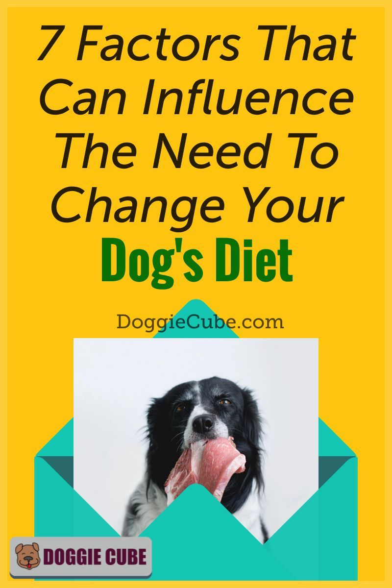 7 Factors That Can Influence The Need To Change Your Dog S Diet Doggie Cube Dog Diet Dog Nutrition Dog Health