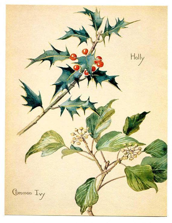 Vintage Nature Scene Botanical Bookplate Illustration