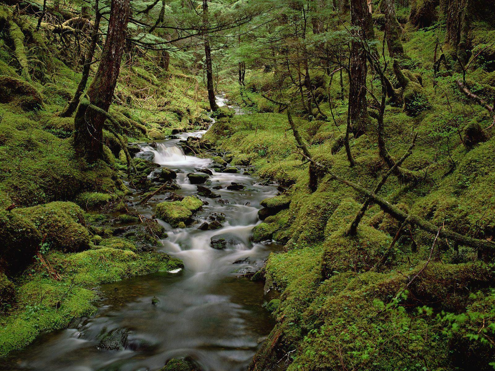 Image result for temperate rainforest biome Pictures