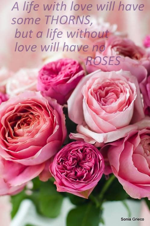 Pin By Sonia On My Quotes Wonderful Flowers Beautiful Flowers