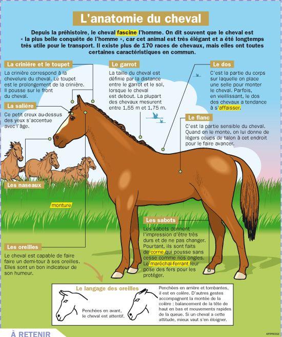 Favori L'anatomie du cheval   Anatomie du cheval, Anatomie et Fiches UP07