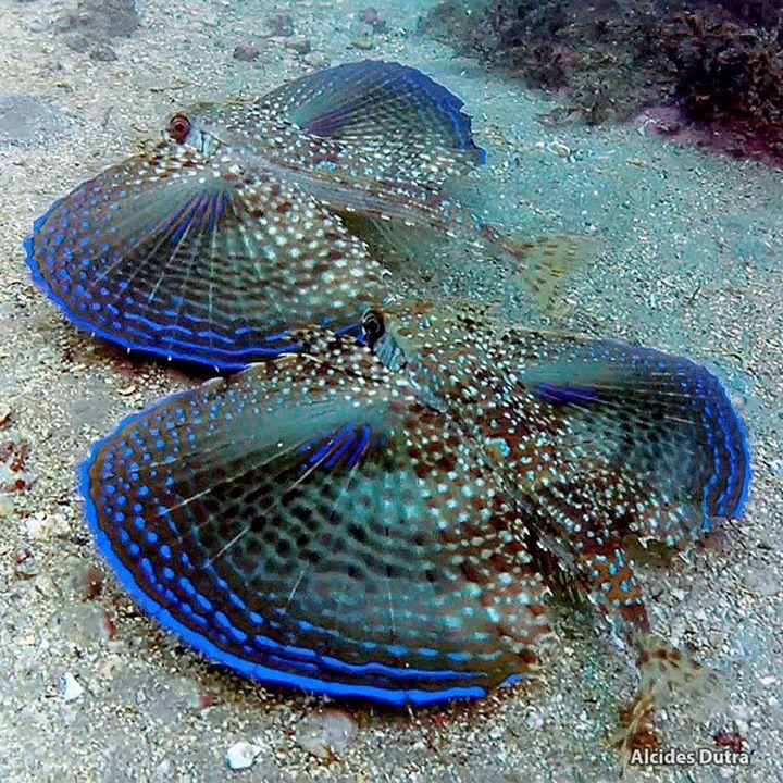 Pin By Paula York On Amazing Oceans Beautiful Sea Creatures Marine Fish Sea And Ocean