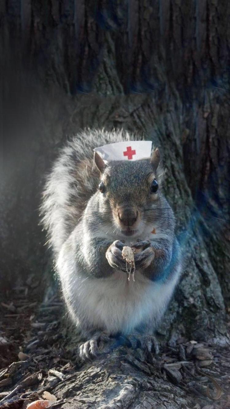 ♡ Squirrel Nurse ♡ | Squirrels | Pinterest | Squirrel, Chipmunks ...