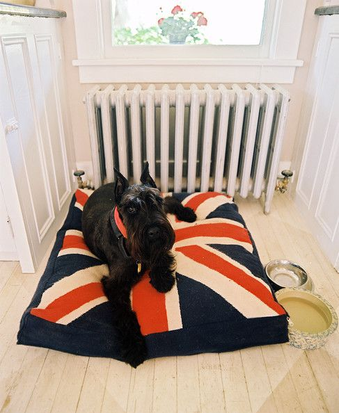 Animal Photo - Deborah Lloyd's dog rests on a Union Jack dog bed in a country-style kitchen.