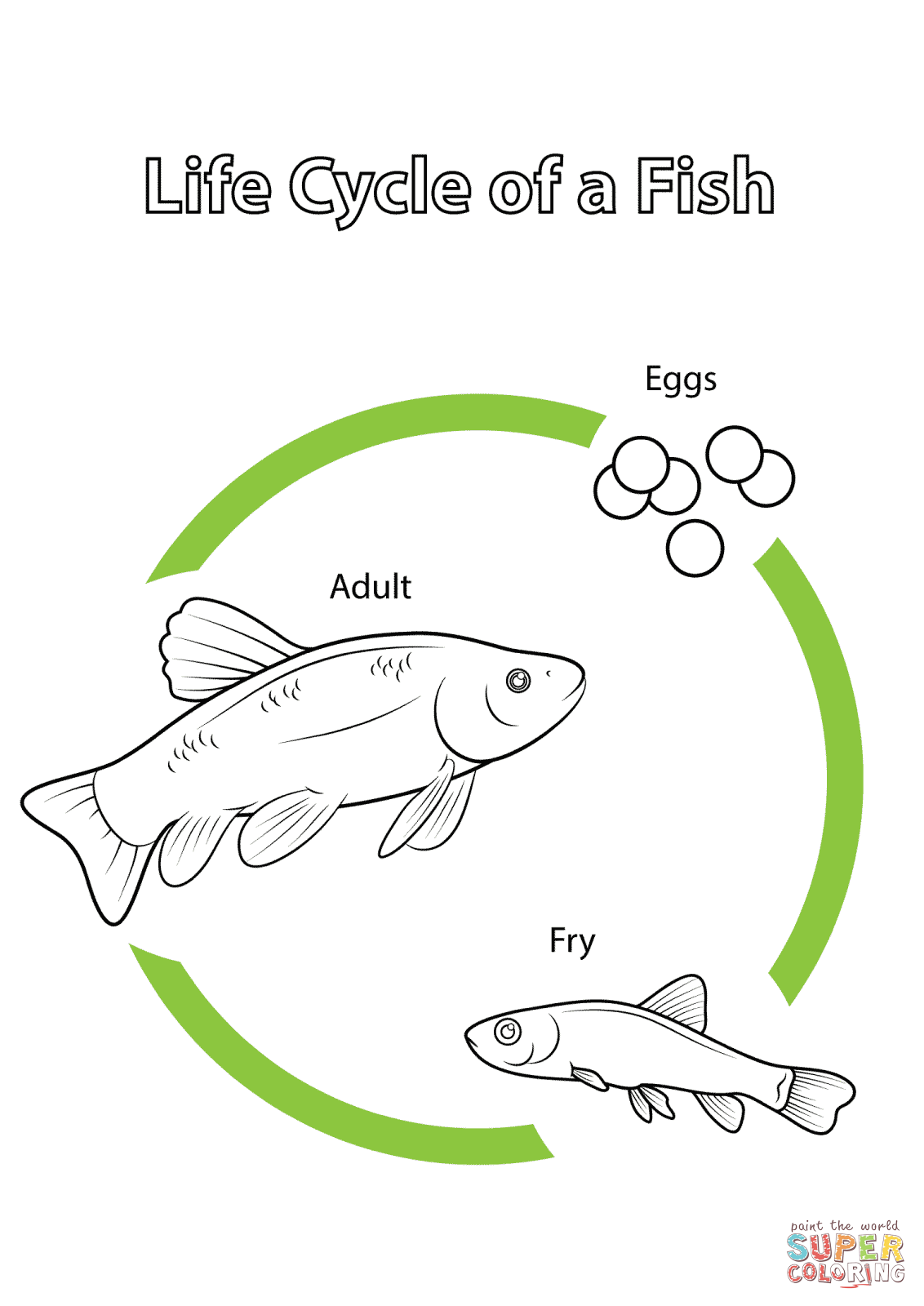 life cycle of a fish super coloring science pinterest cycling montessori and abc activities. Black Bedroom Furniture Sets. Home Design Ideas