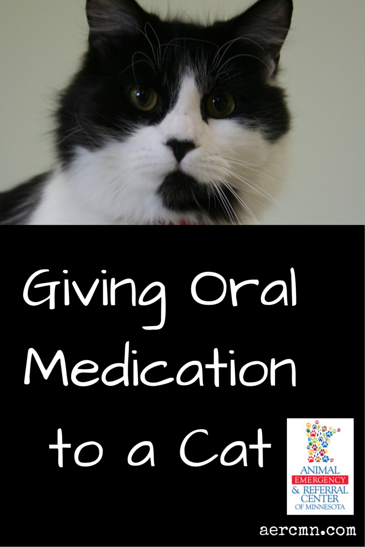 Giving oral medication to a cat Emergency vet, Pet