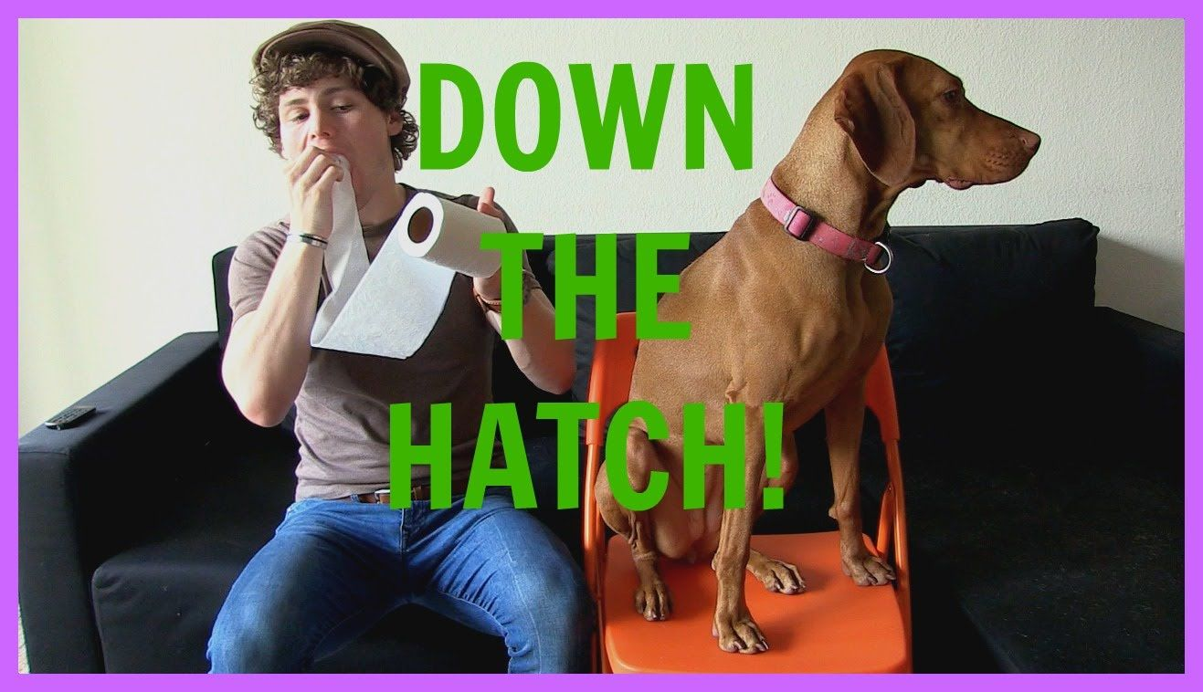 why does drew lynch need service dog