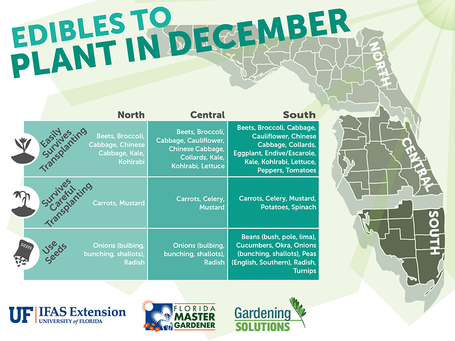 Graphic Listing Fruits And Vegetables To Plant In January For Florida, See  Gardening Calendar Publications Linked Below For Text Versions.