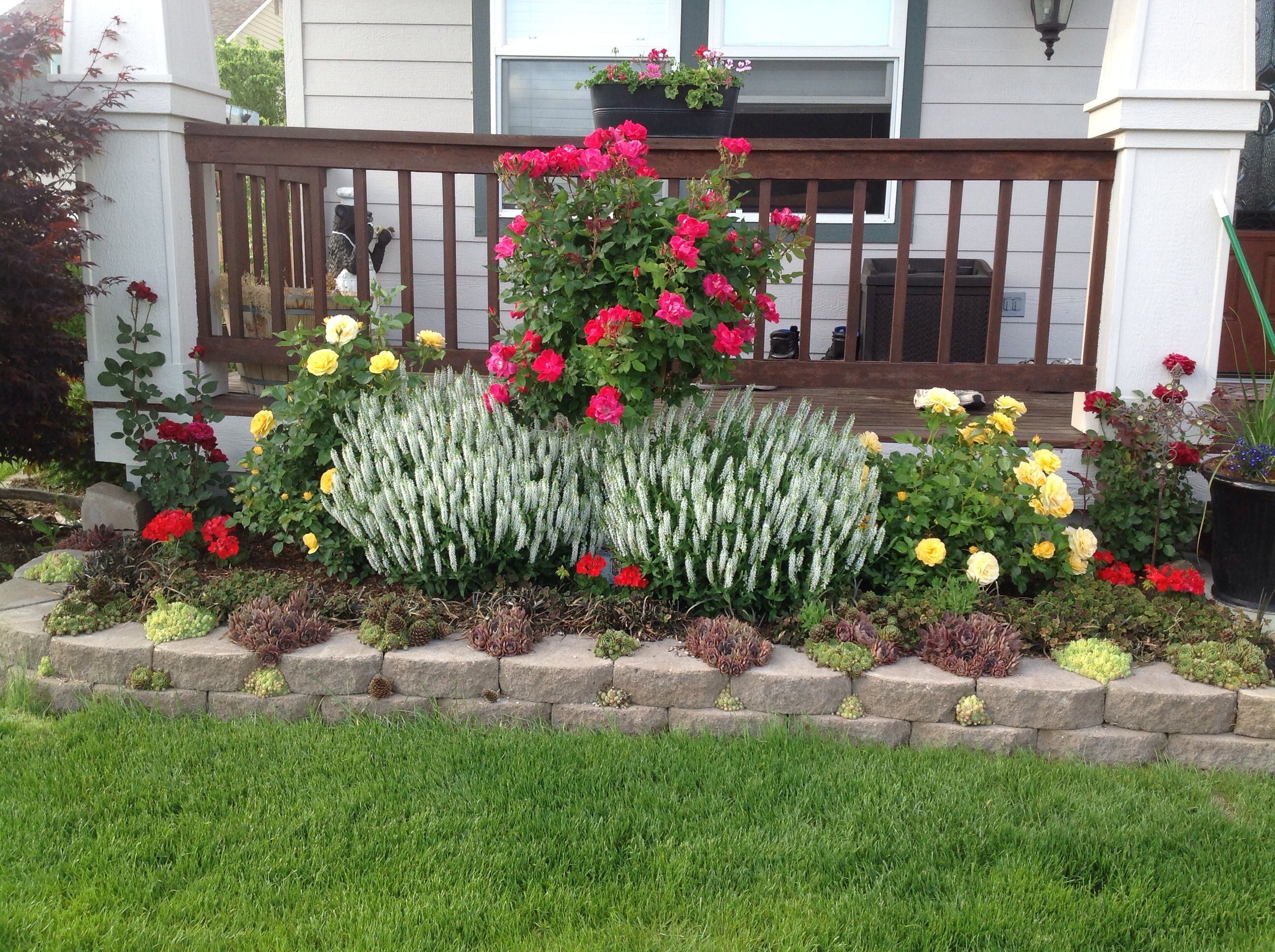 Front garden. Julia Child roses smell awesome!   Garden ...