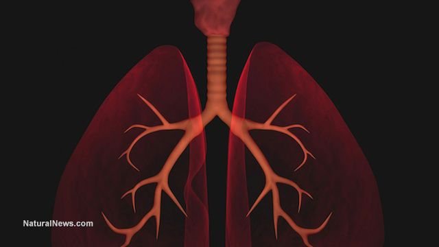 Top herbs to help cleanse lungs, make breathing easier