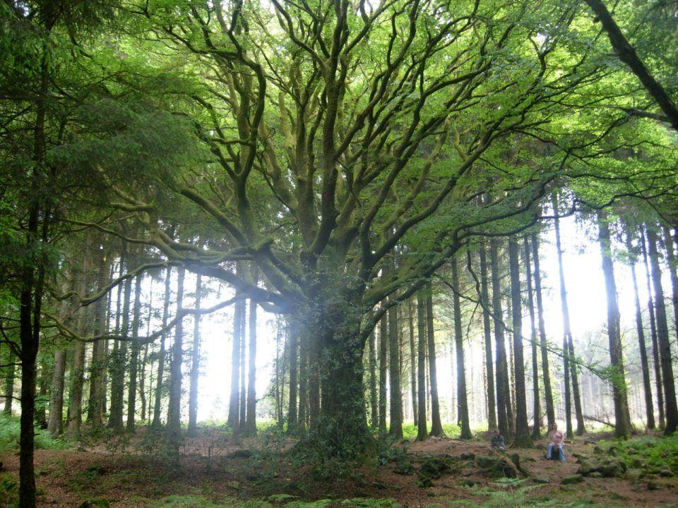 los árboles más hermosos del mundo