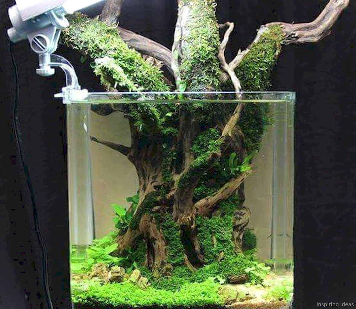 28 Aquascaping Ideas for Inspirations