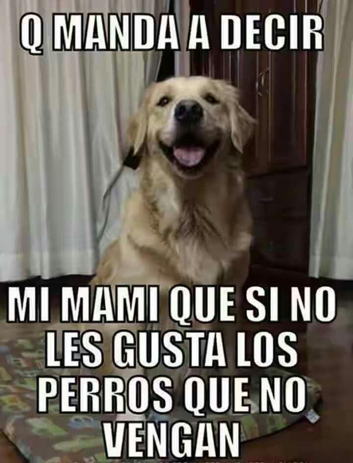 Good Boy Perros Amantes De Perros Perros Frases