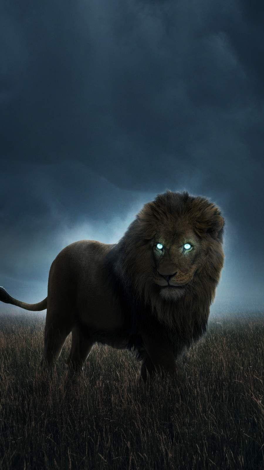 Hunting Lion Iphone Wallpaper Animal Wallpaper Iphone Wallpaper