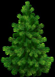 árvores Pinheiro 3 Clipart árvore Arvores De Natal