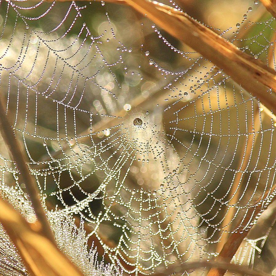 Web of Jewels Photograph  - Web of Jewels Fine Art Print
