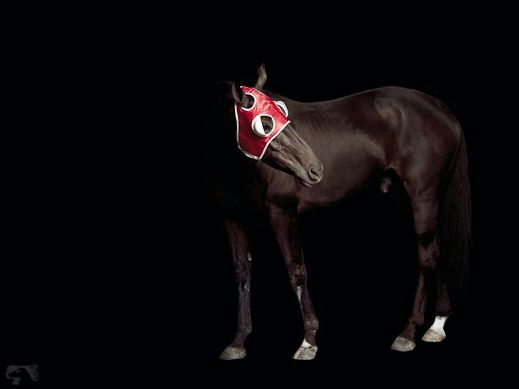 www.lacavalieremasquee.com / Elena Dorfman: Pleasure Park Horse