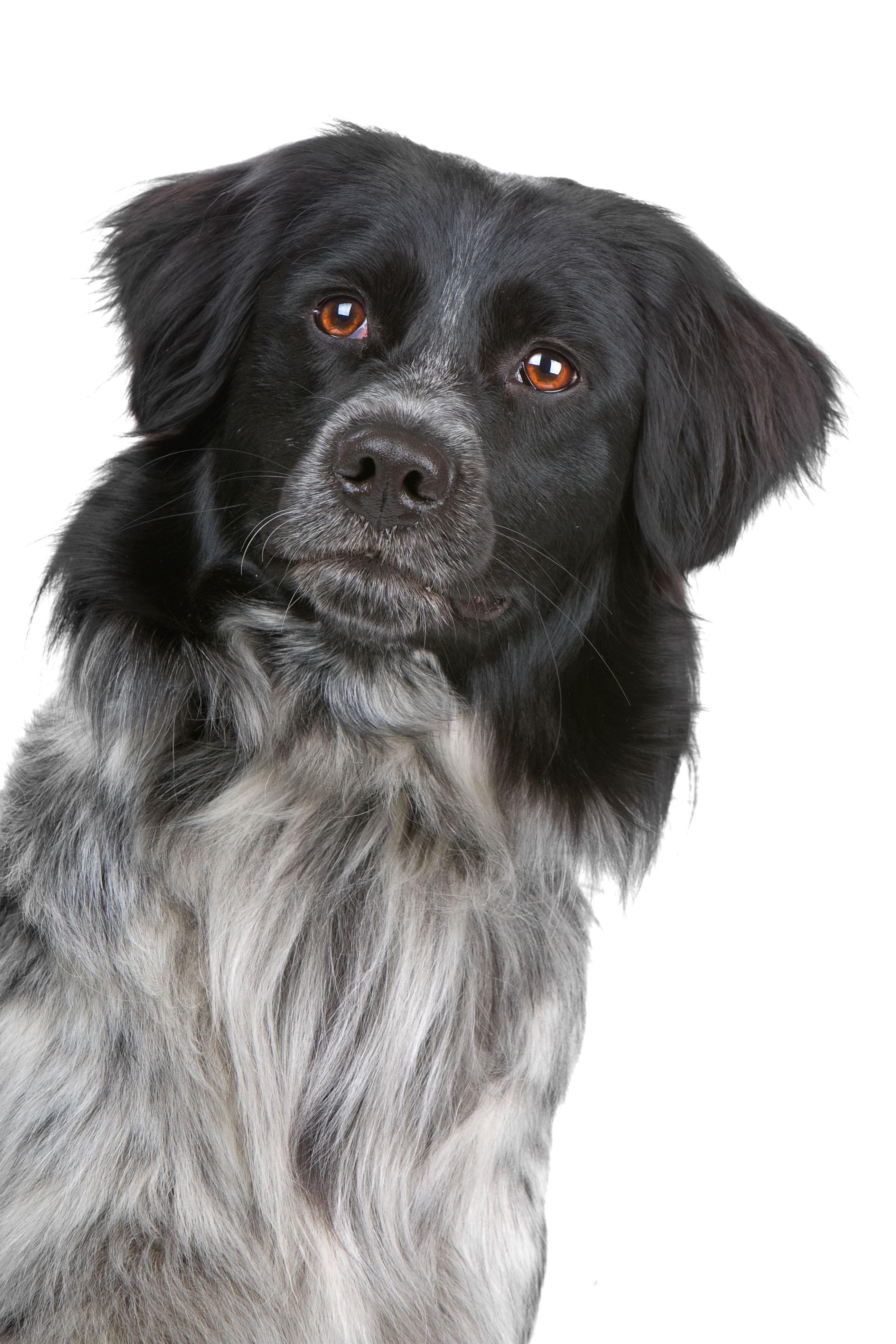 Pancreatitis A Serious, LifeThreatening Illness For Pets