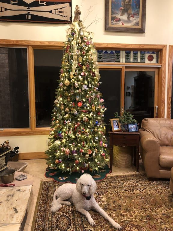 Saratoga Spruce™ Tree Balsam hill christmas tree
