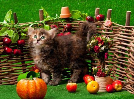 Autumn Siberian Kitten Desktop Nexus Wallpapers Kittens Cutest Happy Animals Cute Desktop Wallpaper
