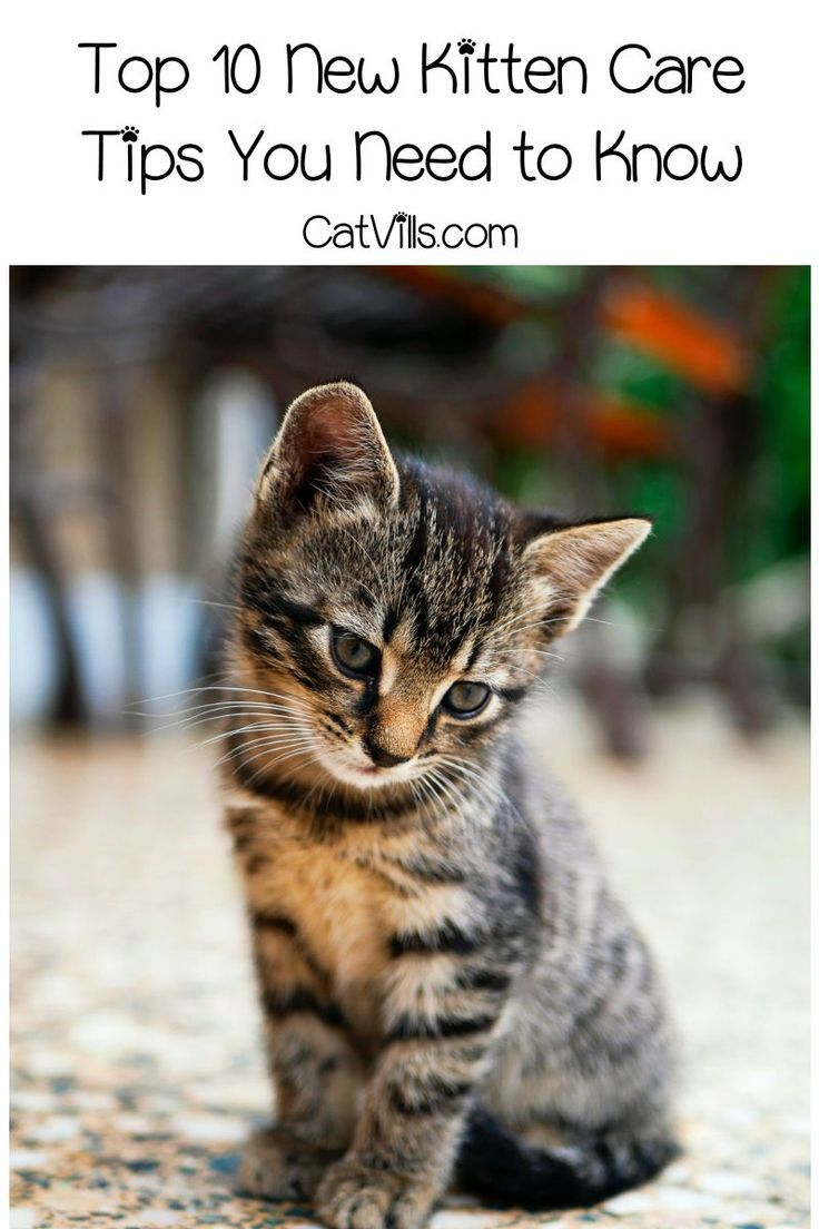 Top 10 New Kitten Care Tips You Need to Know Kitten care