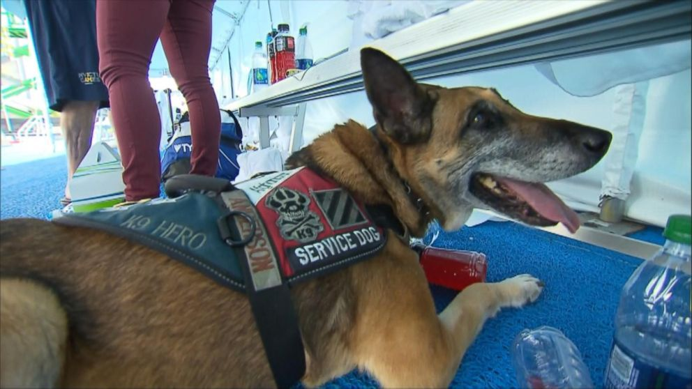 Service Dogs Help Wounded Warriors Win Gold at Invictus