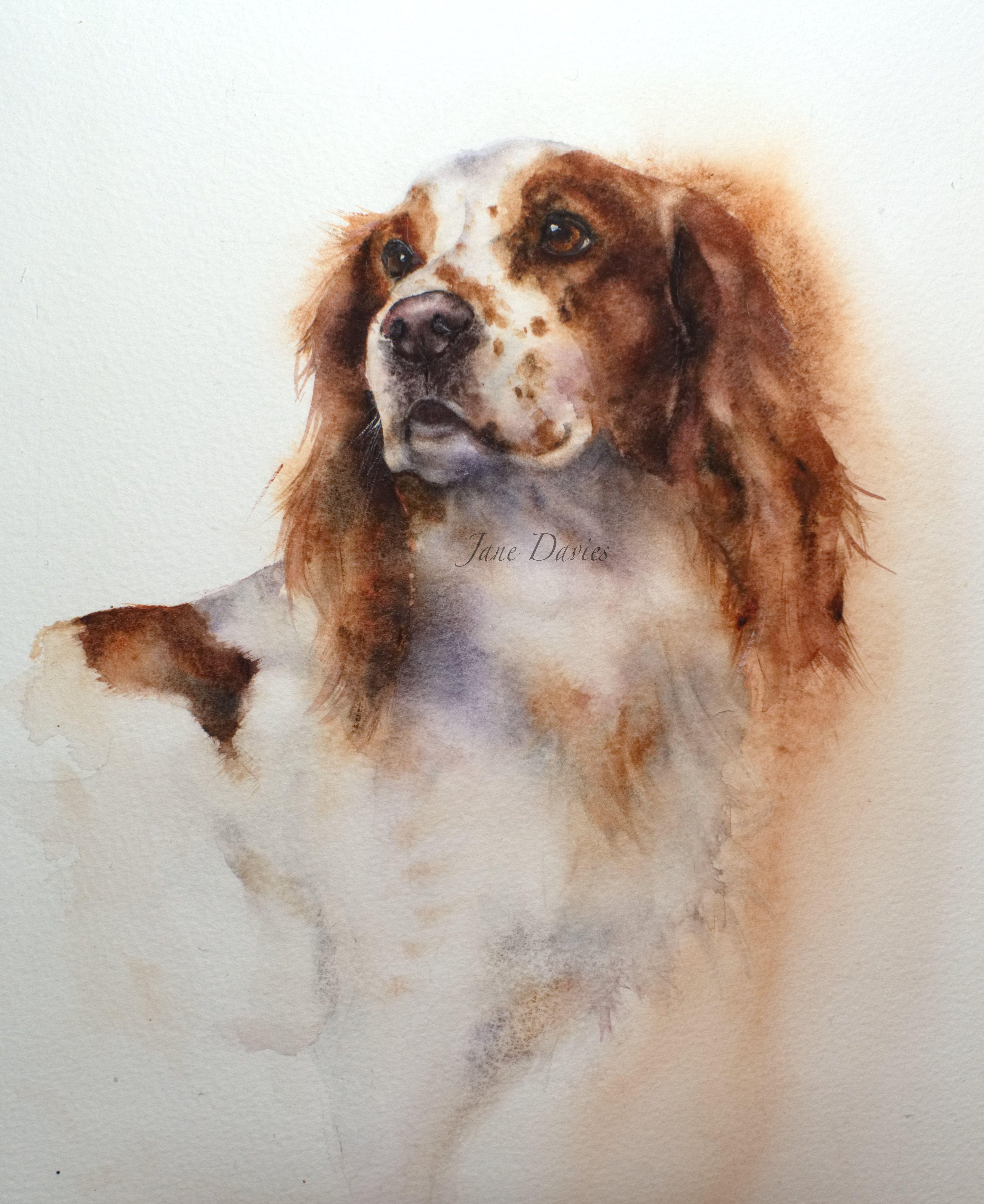 Pet Portrait Of A Cocker Spaniel Painted By Watercolour Artist Jane Davies Animal Paintings Dog Art Pet Portraits