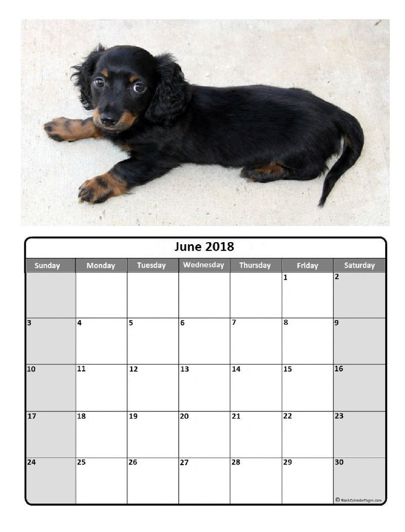 2018 dog calendar pdf