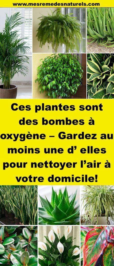 ces plantes sont des bombes oxyg ne gardez au moins une d elles pour nettoyer l air votre. Black Bedroom Furniture Sets. Home Design Ideas