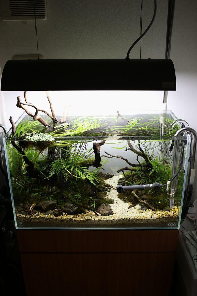 Aquascape Aquarium Design Ideas 32   Aquascape aquarium ...