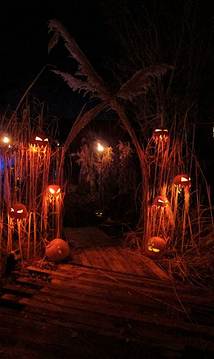 Pin By Careis Matik On Witch Doctor 2020 Halloween Outside