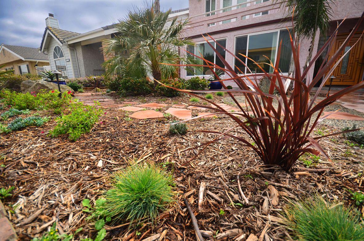 Beautiful Southern California Drought Tolerant Yard By Scarlett S Landscape Inc Http