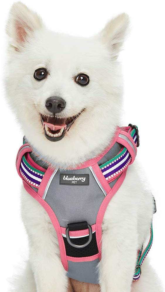 Blueberry Pet 2019 New 3 Colors Soft & Comfy