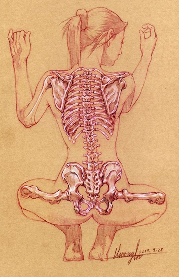 Squatting female back skeletal anatomy drawing, 2015. #xray | Human ...