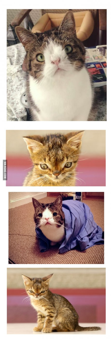 Down syndrome cats