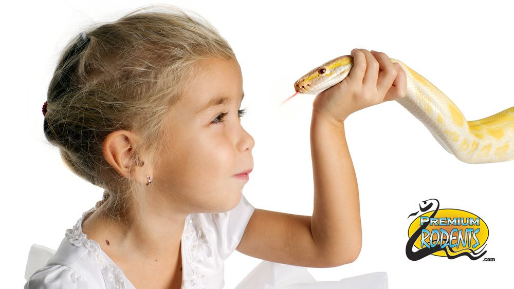 Pet Snakes For Sale South Florida Rodents Snake Food Pet Snake Pet Snakes For Sale Snakes For Sale