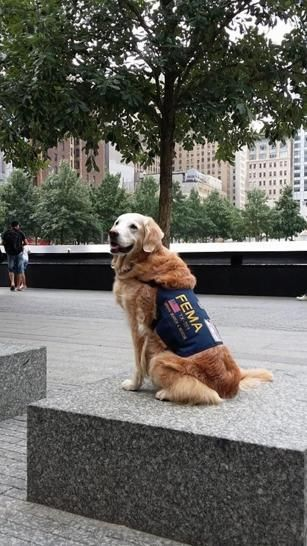 Last Known Surviving 9 11 Rescue Dog Returns To Nyc To Celebrate Sweet 16 Birthday Rescue Dogs Luxury Dog Collars Dogs