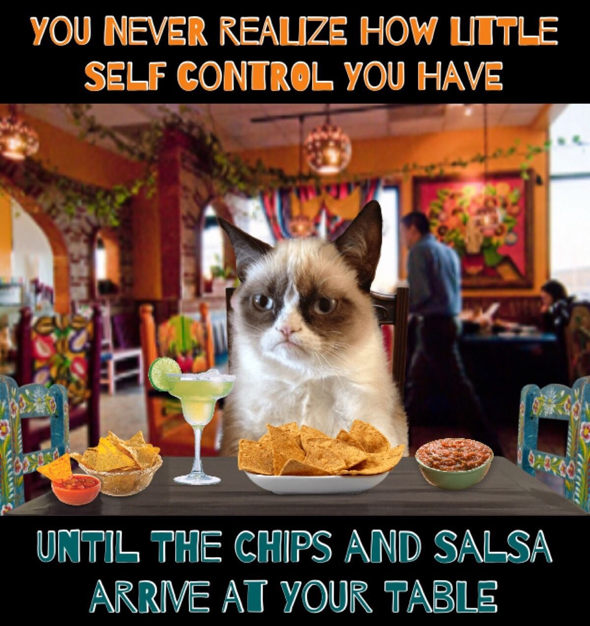 Grumpy Cat Says You Never Realize How Little Self Control