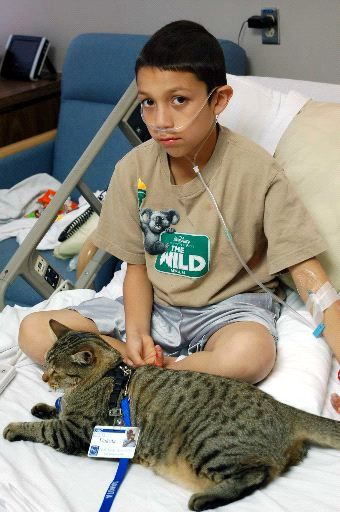 Cats Can Be Service Animals Too Therapy Animals Therapy Cat Service Animal