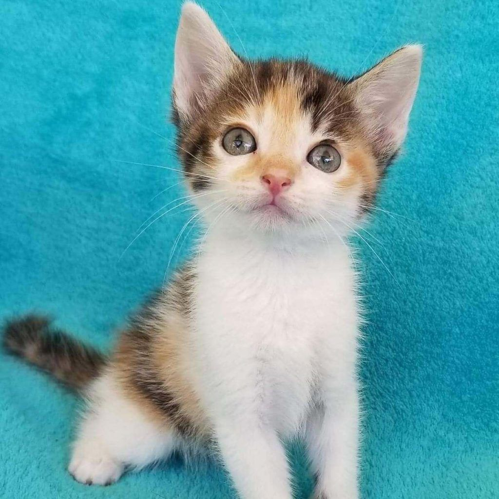 Some Of The Cutest Cat Names For Your Calico Cat Кошки