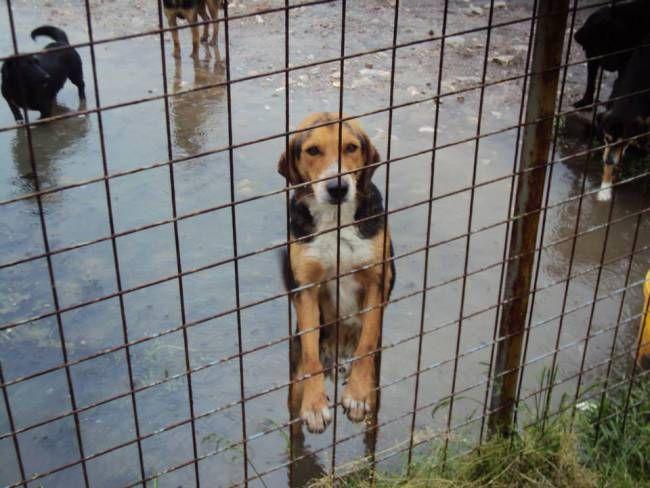 Dog Shelter In Tuzla Urgently Needs Food Shelter Dogs Dogs Animal Activism