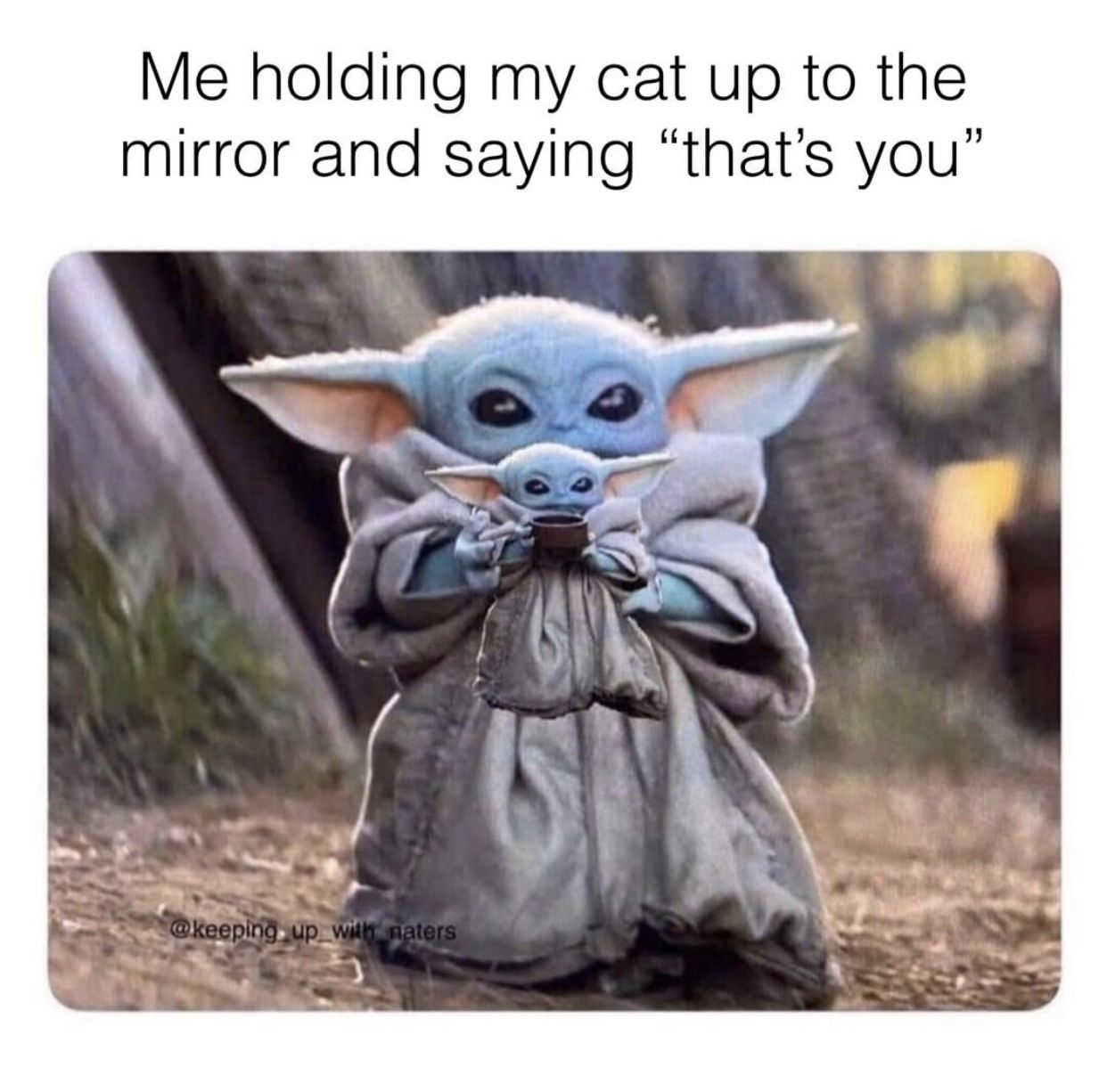 Pin By Teresa Papaleo On Pets Yoda Funny Yoda Meme Yoda