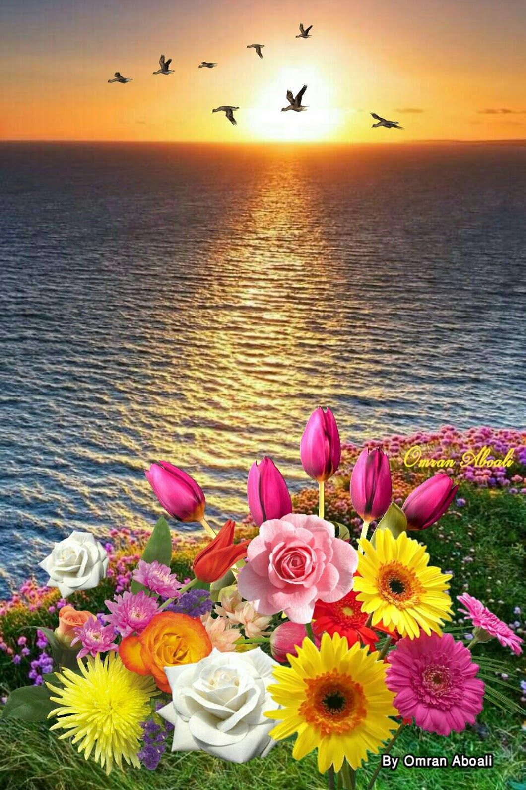 By Omran Aboali - google+ | Paisagens | Flowers, Nature photography, Beautiful flowers
