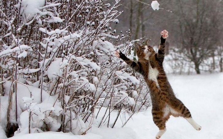 Winter Animals Winter Snow Cats Animals Funny 1280x800 Wallpaper