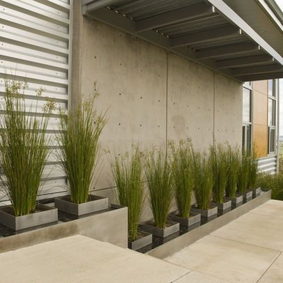 Evergreen Container Plants Design Ideas Pictures Remodel And Decor Page 10 Modern Landscaping Modern Landscape Design Modern Garden