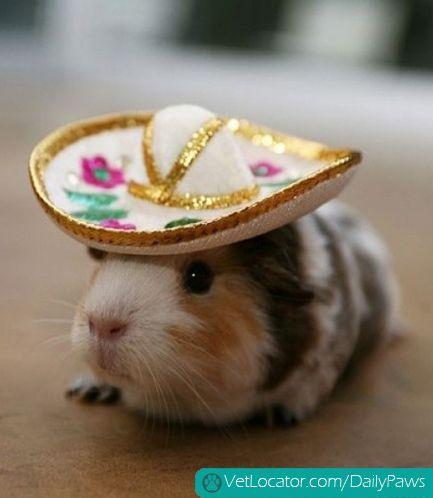 Adorable Pets Get into the Spirit of Cinco de Mayo - Daily Paws ...