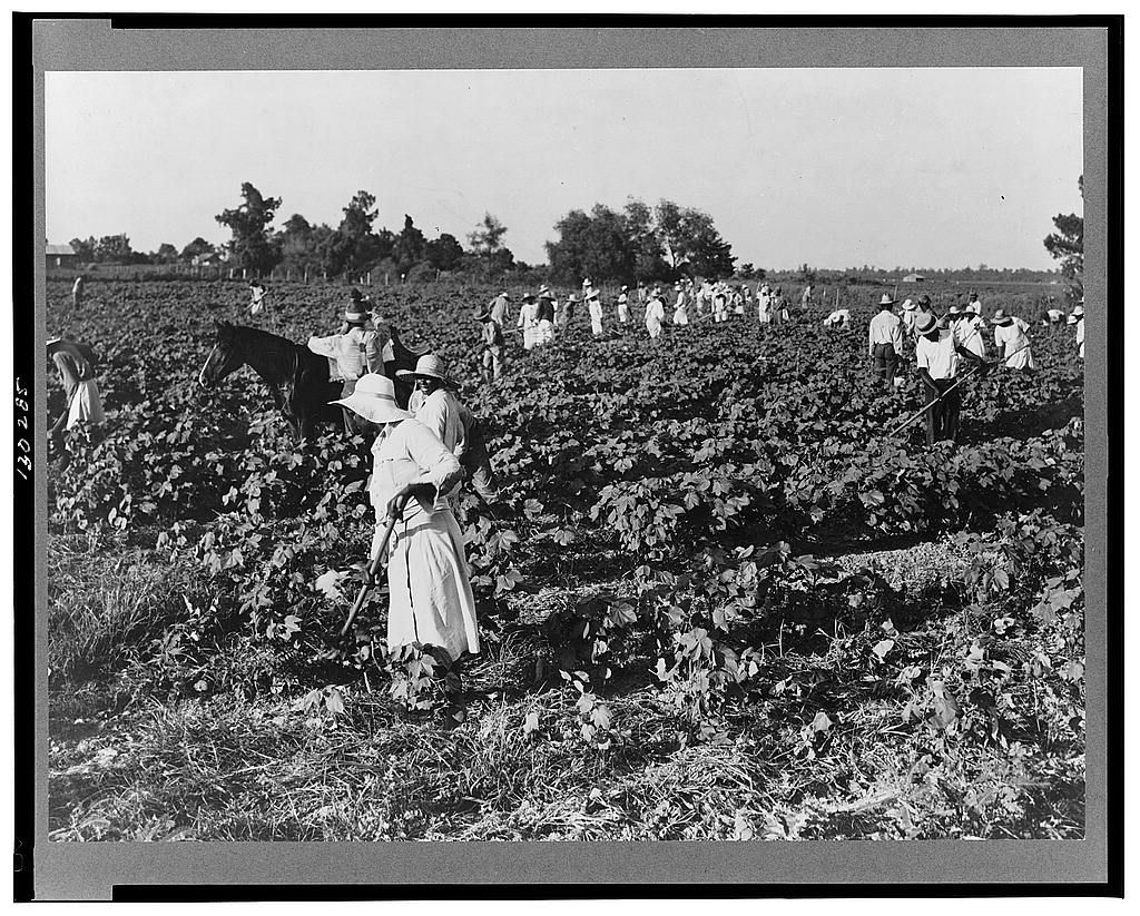 Variety of scenes on a cotton plantation. This soon became the way ...